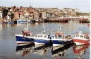 Whitby_4