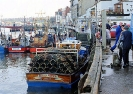 Whitby_5